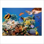 Aquarium fish Block Giant Wall Art Poster