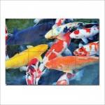 โปสเตอร์ ขนาดใหญ่ ภาพปลาแฟนซีคาร์ป Koi Fish
