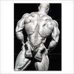 โปสเตอร์ ขนาดใหญ่ ภาพนักเพาะกาย Shawn Rhoden - Back