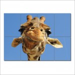 Giraffe Close Up Animal Block Giant Wall Art Poster