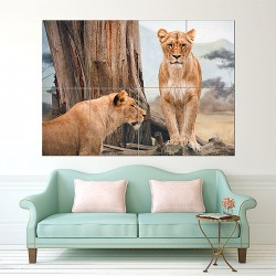 African Lioness  Block Giant Wall Art Poster (P-1616)
